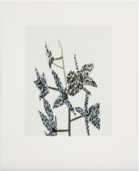 Untitled Set of 2 (Orchids)