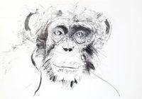 Chimp - Original
