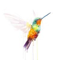 Hummingbird IX (Hand Finished)
