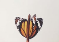 Butterfly Dart
