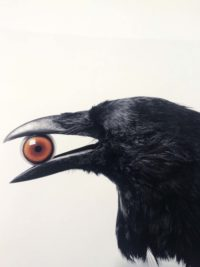 Crow with Eye
