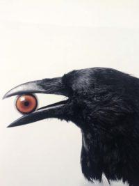 Crow with Eye