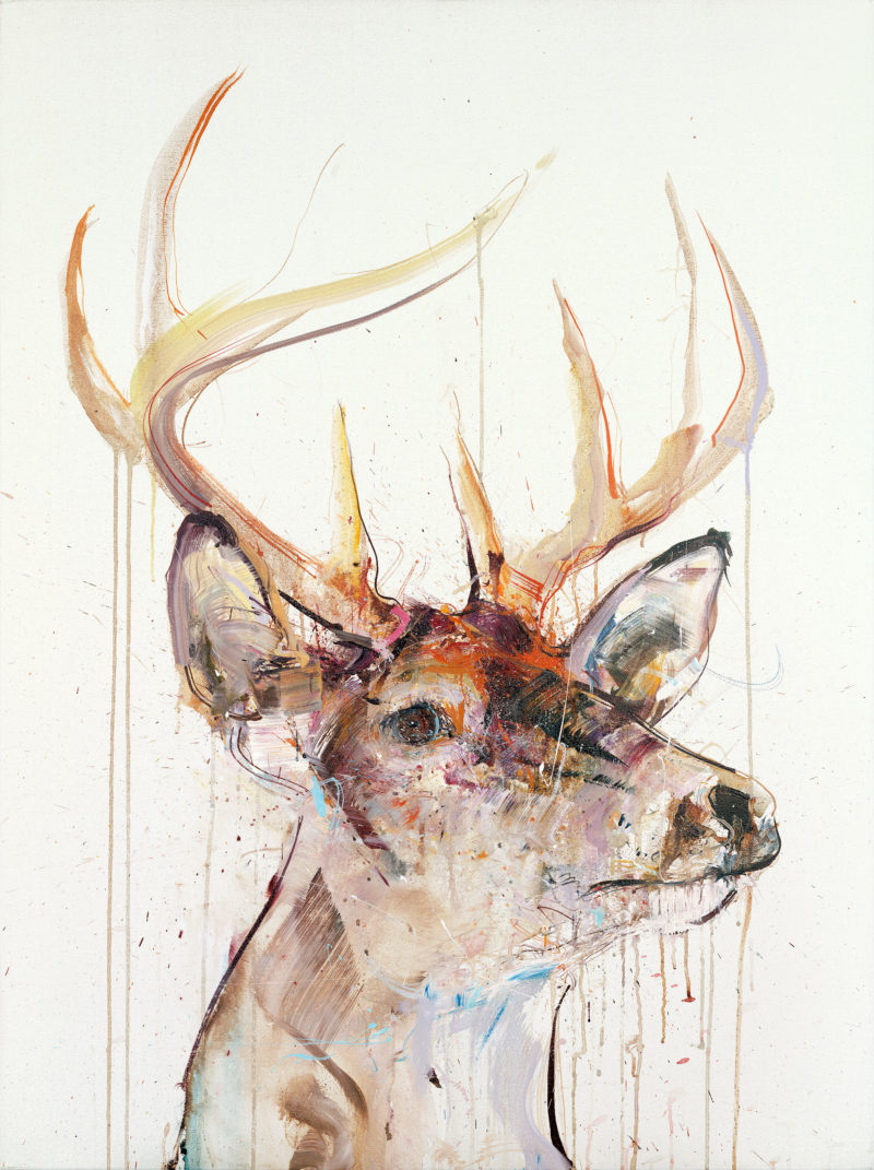 Stag IV
