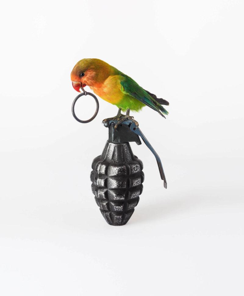 Lovebird with Grenade