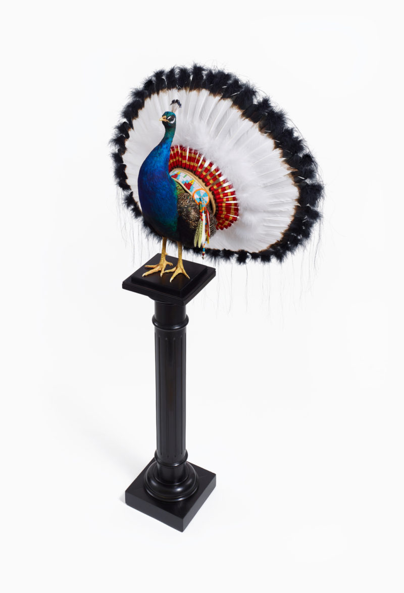 Peacock War Bonnet