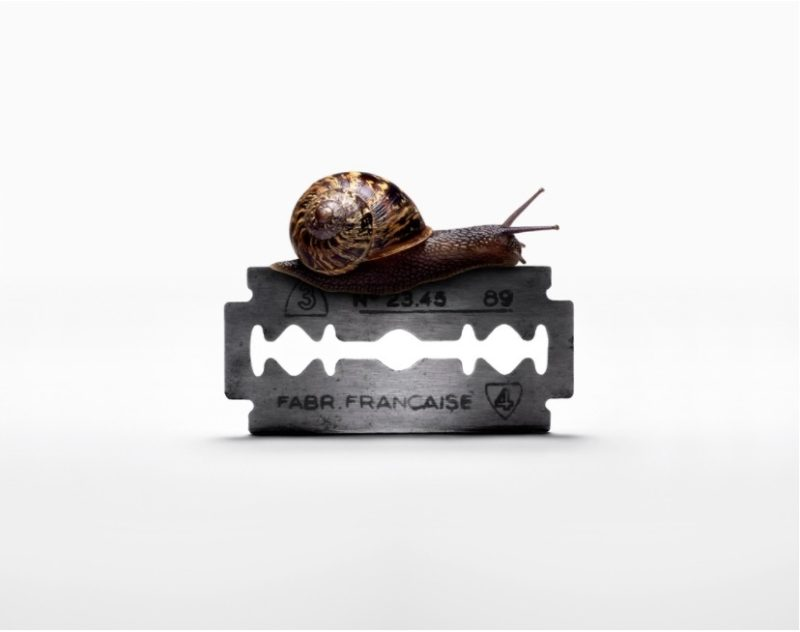 Snail on Razorblade