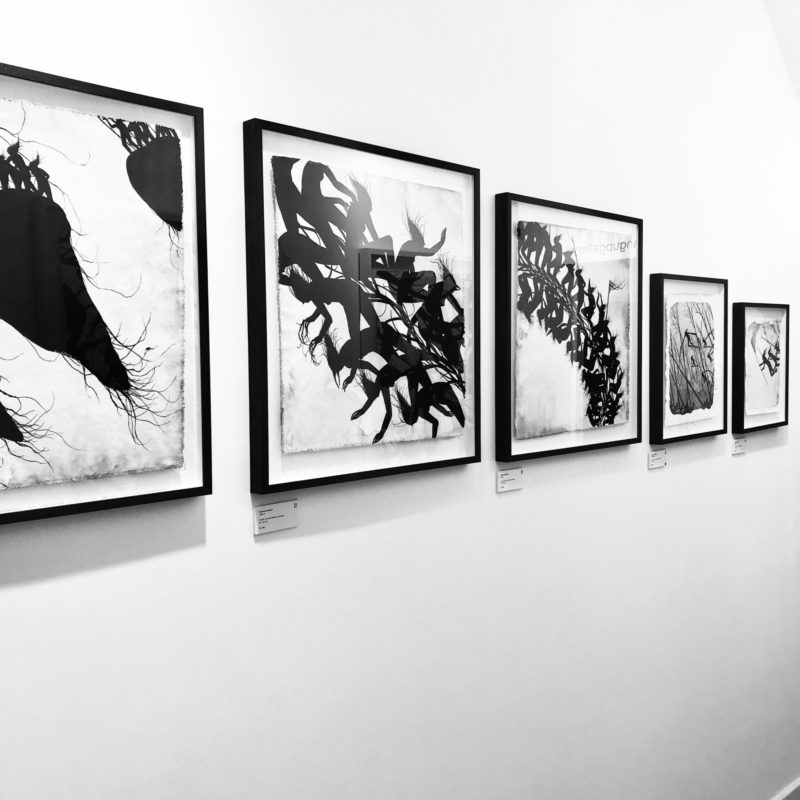 Your Last Chance to View 'Adrift' | Here until the 14th of January!